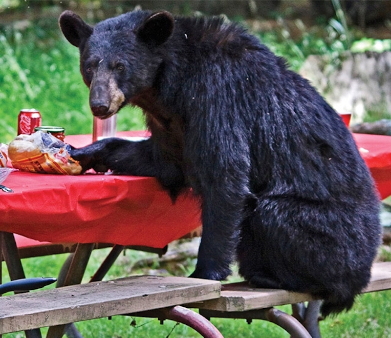 A bear sitting at a picnic table with a red cloth.