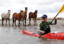 man paddling red kayak with three ferrel horses behind him