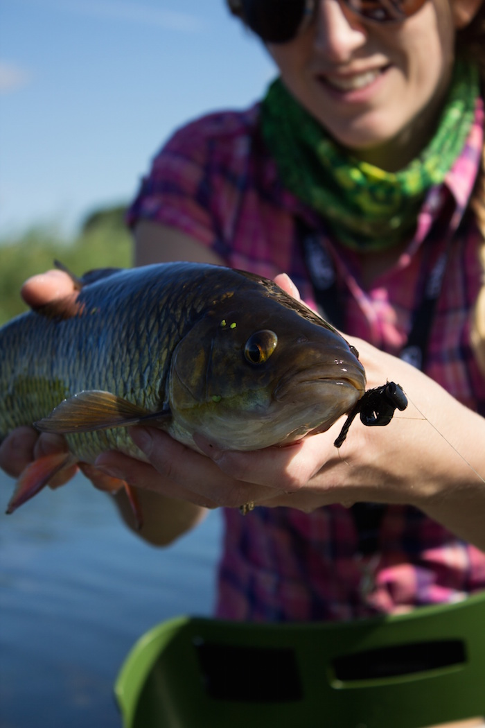 Whitefish, aka chub, won't shy away from a properly presented lure or fly.