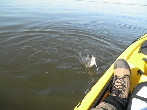 Chesapeake Bay Flats 4