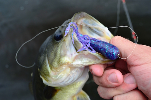 A bass with a lure still attached in its mouth is held up.