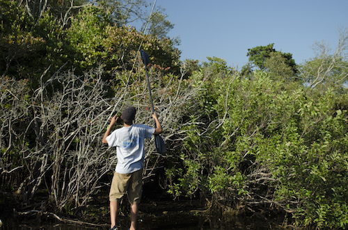 Ben Duchesney stands up on his fishing kayak to untangle a lure stuck high in a tree.