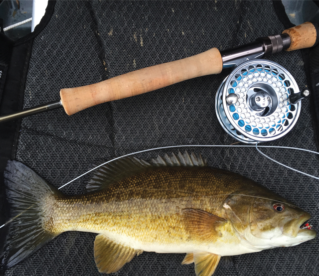A smallmouth bass under the fly rod used to catch it.