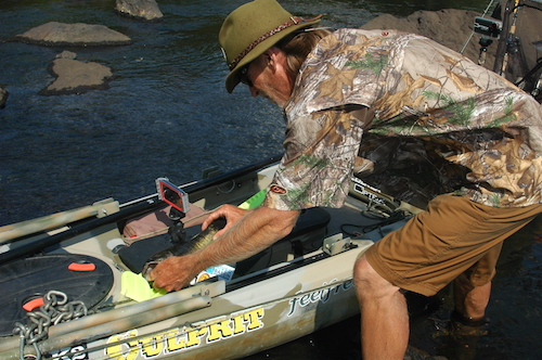 Eddie McRae measures another Chattahoochee River shoal bass.