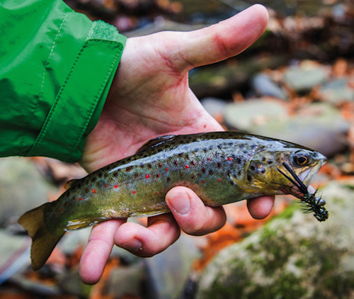 There's nothing prettier than a big brown trout surrounded by fall colors.
