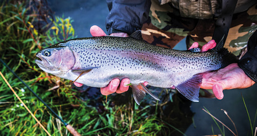 New York has giant rainbow trout, ripe for the catching.
