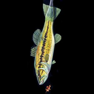 JACQUELINE MORIN PROUD - Largemouth Bass