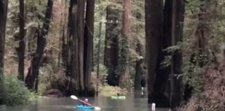 Humbolt's Flooded Avenue Of The Giants