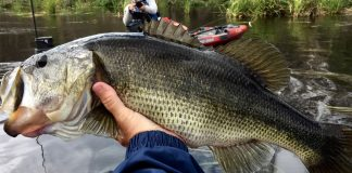 angler holding a large bass from his fishing kayak