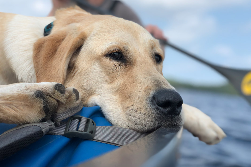 a dog laying down on a canoe while a person paddles in the background