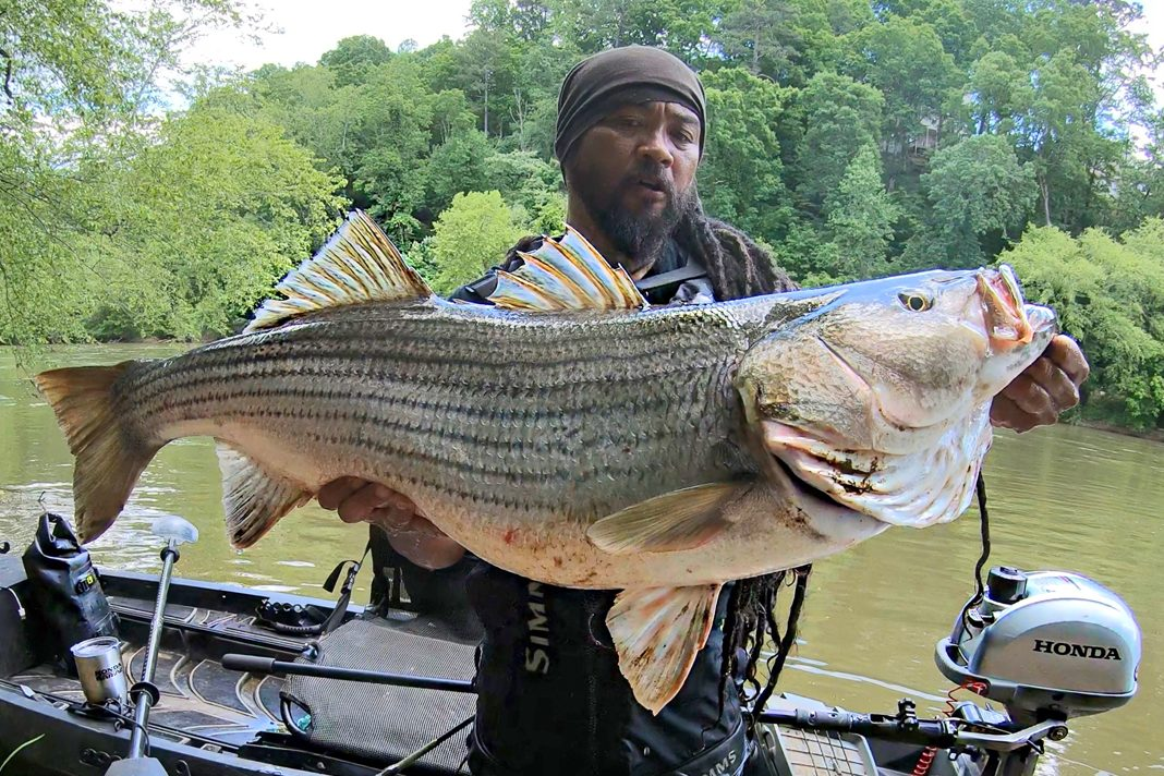 River Wolf with striped bass in Acworth, Georgia