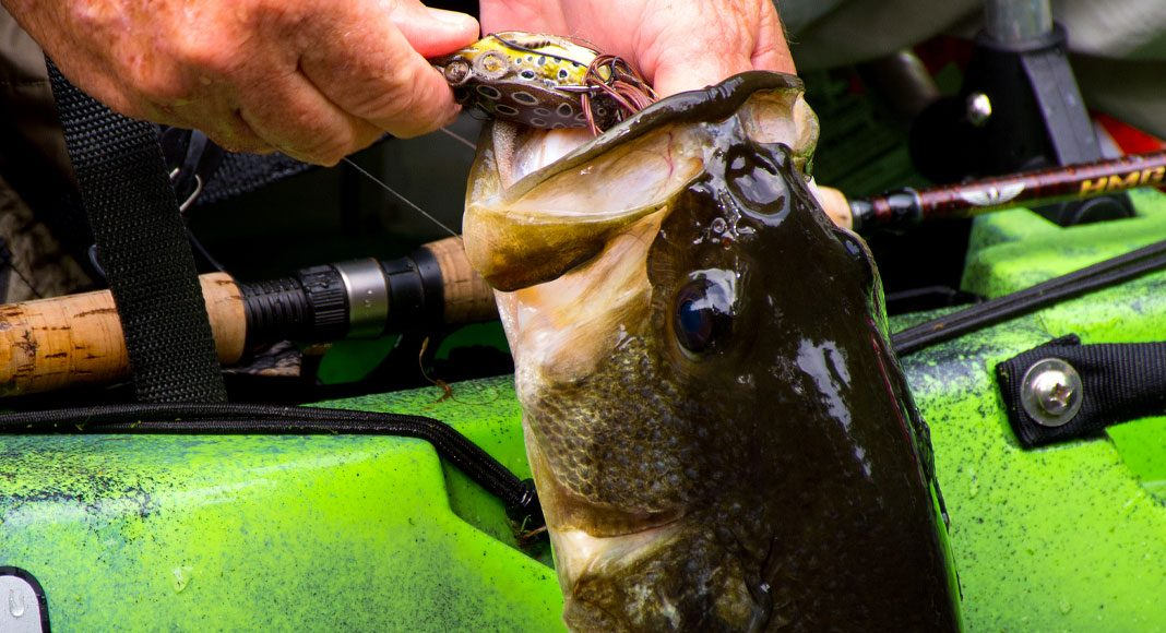 Catching a largemouth is the first step in a bass slam. | Photo: Chris Funk