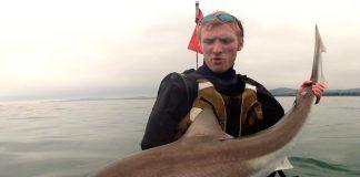 """One of Ireland's """"mini"""" sharks. Photo Gary Robinson"""
