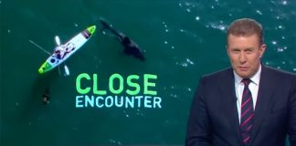 News report on encounter between kayak and great white shark