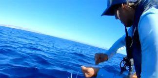 Bri Andrassy prepares to bill a marlin