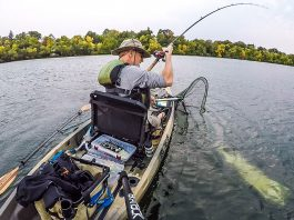 Minnesota muskie are a big reason to visit the state with 10,000 lakes.   Photo: Michael Thompson