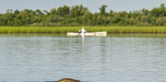 Look out for redfish and gator trout. | Photo: Chris Castro