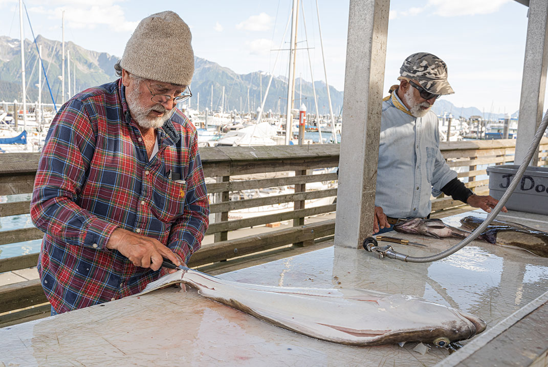 Halibut are a big draw for Seward visitors. Watching guides clean their catch and listening to their fish stories is a good way to learn about local fishing.   Photo: Dustin Doskocil