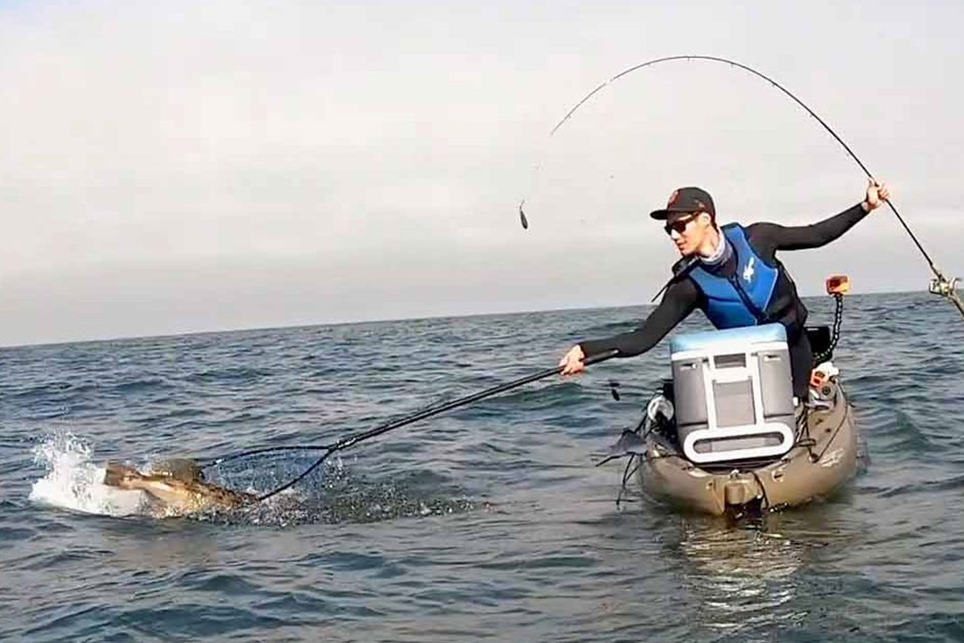 kayak fisherman nets a large lingcod