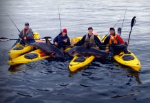 group of kayak anglers pose with two salmon sharks they caught in Alaska