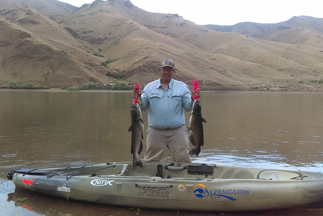 man holds up two channel catfish caught with Mormon crickets as bait