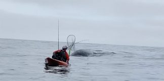 kayak angler gets up-close encounter with gray whale