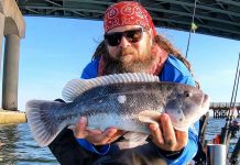 man holds up a blackfish he caught while fishing, also known as a tautog or tog