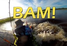florida inshore kayak angler slammed by manatee video